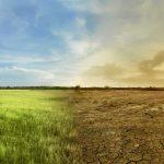 Ecologia dei tarli – condizioni climatiche e cicli biologici
